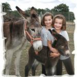 girona_diana_gid_el_burro.jpg